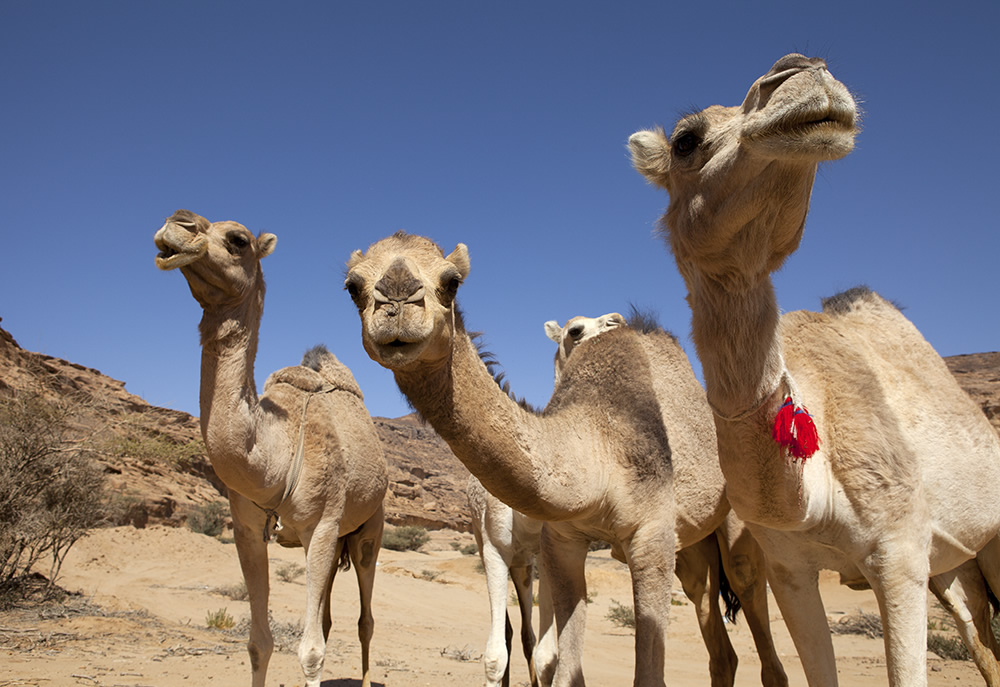 Getting over the camel hump the layman online
